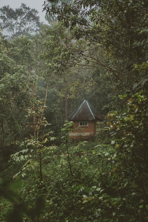 Photo of House In Forest