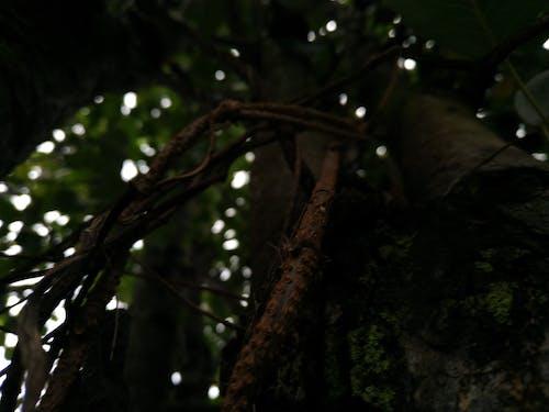 Gratis stockfoto met bomen, boom, Bos, groen