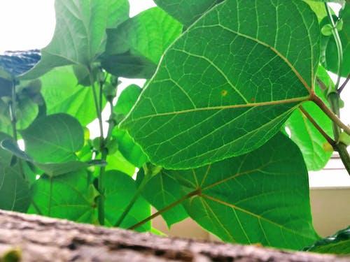 คลังภาพถ่ายฟรี ของ ธรรมชาติ, ปาร์ค, สีเขียว, ใบไม้