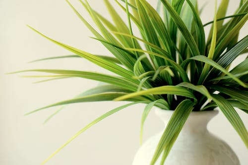 Ilmainen kuvapankkikuva tunnisteilla kasvi, kasvu, lehdet, lehvät