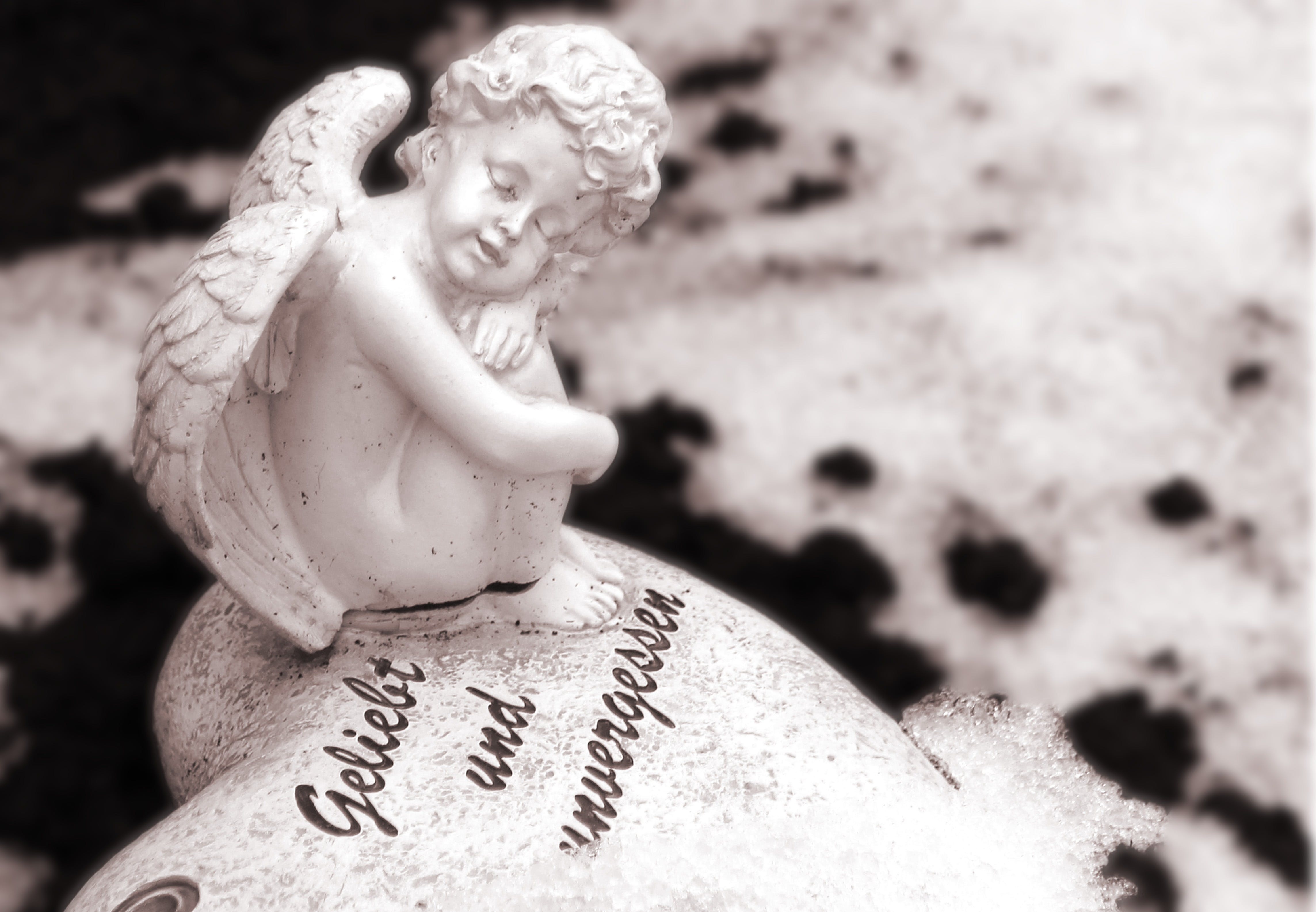 Free stock photo of angel, commemorate, fig, memory