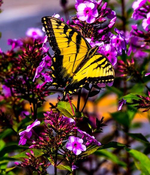 açık hava, batı virginia, çiçek, doğa içeren Ücretsiz stok fotoğraf