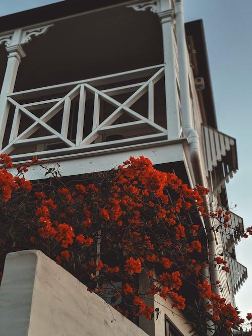 Безкоштовне стокове фото на тему «ботаніка, дім, двір, декорація»