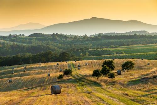 Ingyenes stockfotó Arany, domb, esés, fák témában