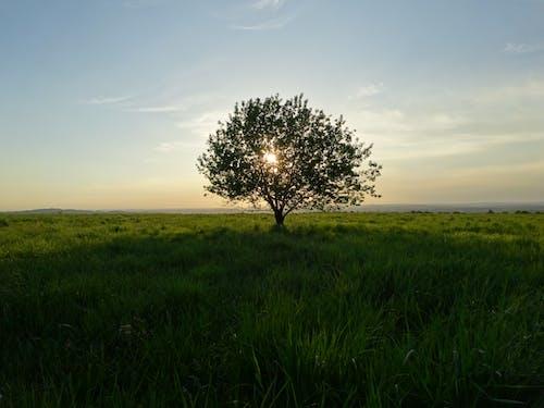 日落, 樹 的 免費圖庫相片