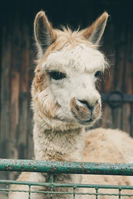 New free stock photo of animal, cute, farm