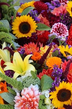 Free stock photo of flowers, display, colorful, blossoms