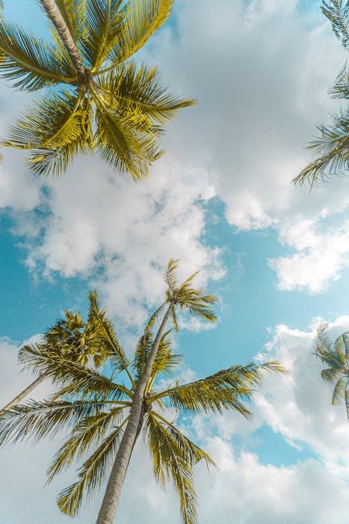 atmosfär, bali, himmel