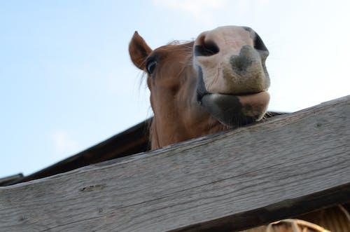 Fotobanka sbezplatnými fotkami na tému kôň, leto, pohľad, slnečný