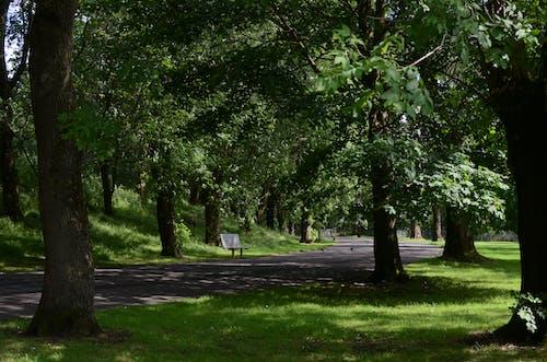 Fotobanka sbezplatnými fotkami na tému Európa, glsgow, greenpark, park