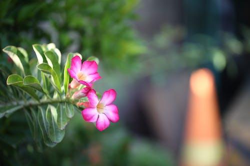 Immagine gratuita di canon, fiori bellissimi, greenn, natura