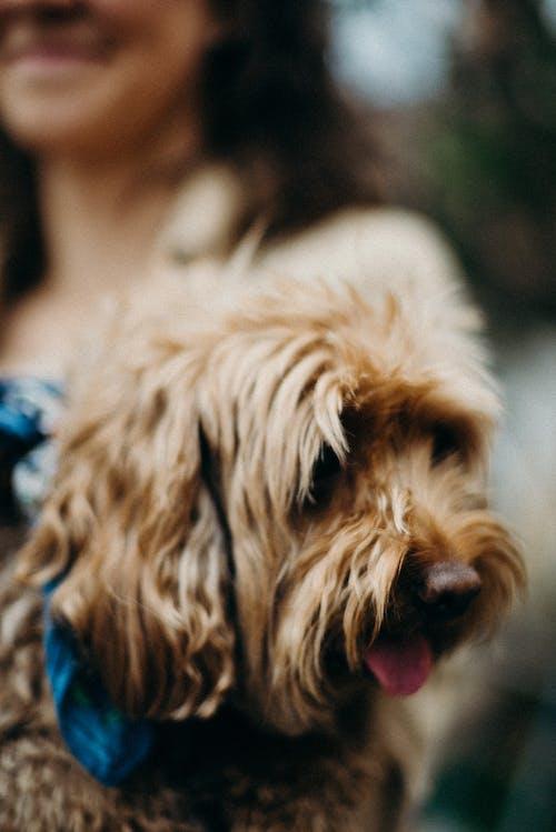Foto d'estoc gratuïta de a l'aire lliure, adorable, amistat, animal