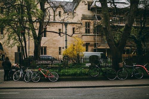 Immagine gratuita di alberi, biciclette, esterno, marciapiede
