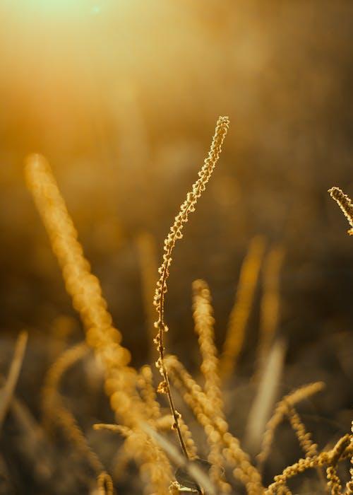 宏觀, 工厂, 草 的 免费素材照片