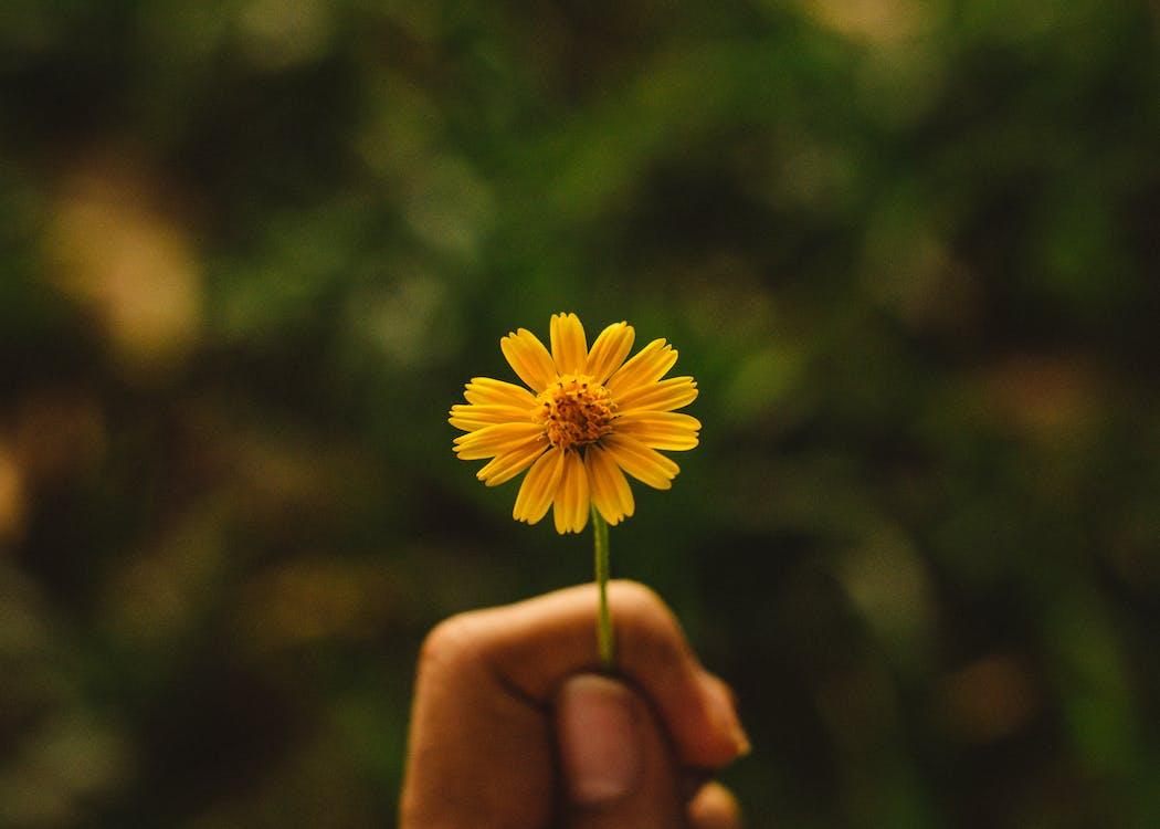 盛开的黄色花瓣花