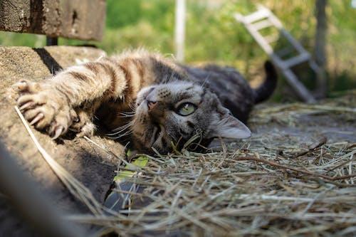 可愛, 小貓, 灰, 灰色 的 免費圖庫相片
