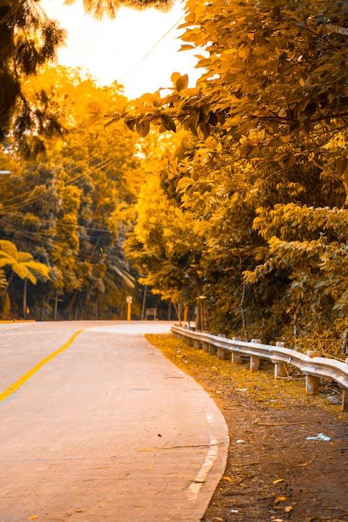 Photos gratuites de arbres, coucher de soleil, feuilles, route