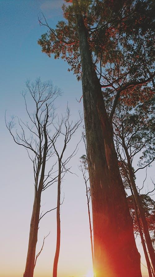Δωρεάν στοκ φωτογραφιών με #outdoorchallenge, απογευματινός ήλιος, δέντρο, ερημιά