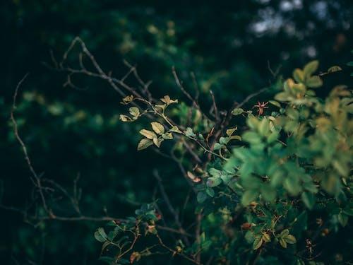 나뭇잎, 녹색, 무성한, 새벽의 무료 스톡 사진