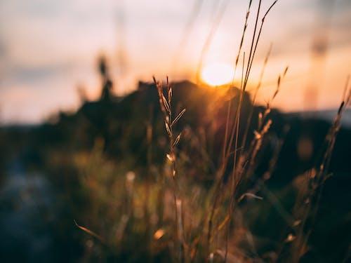 Close-up Photo of Grass