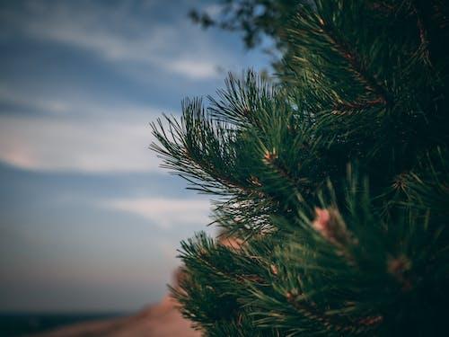 Бесплатное стоковое фото с ветвь, закат, красивый закат, природа