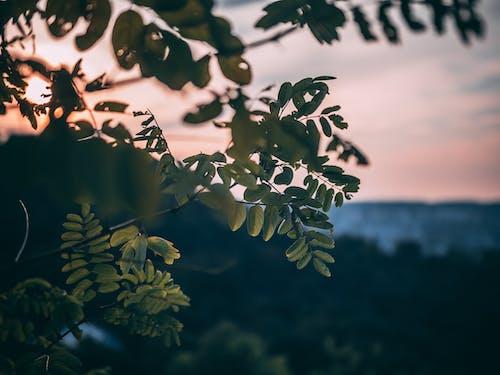 Бесплатное стоковое фото с закат, красивый закат, природа