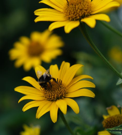 Free stock photo of beautiful flowers, beauty in nature, bee, bees