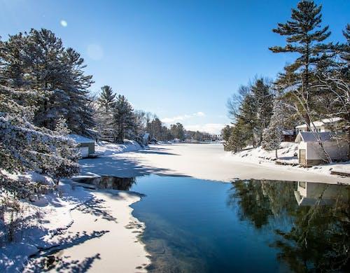 Foto d'estoc gratuïta de aigua, Canadà, congelat, constipat