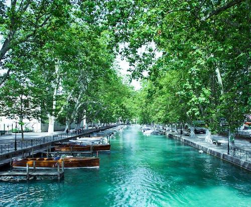Foto d'estoc gratuïta de aigua, arbres, barques, canal