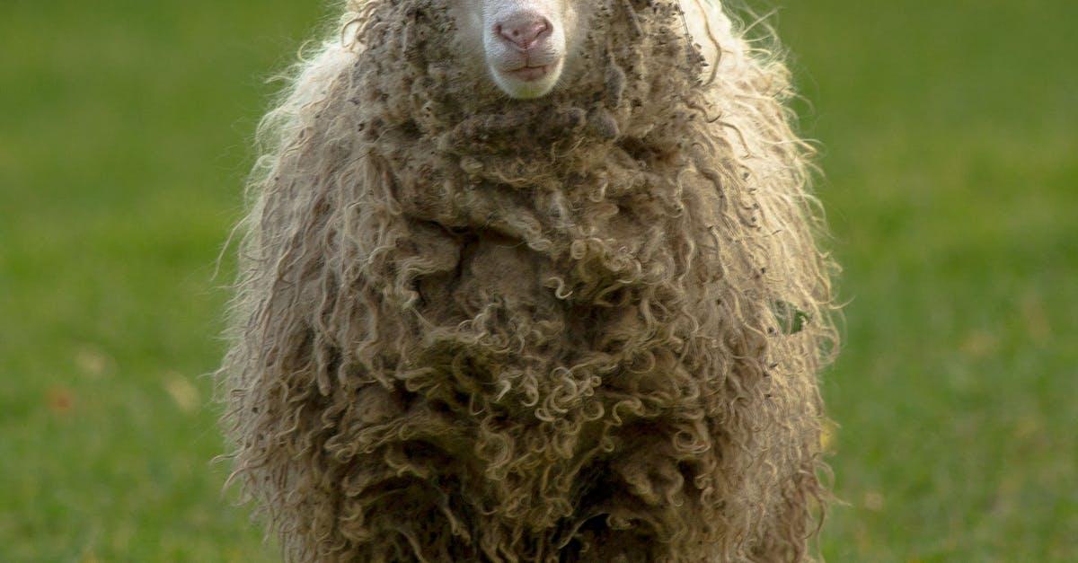 Открытка овечка фото, приколы картинки открытка