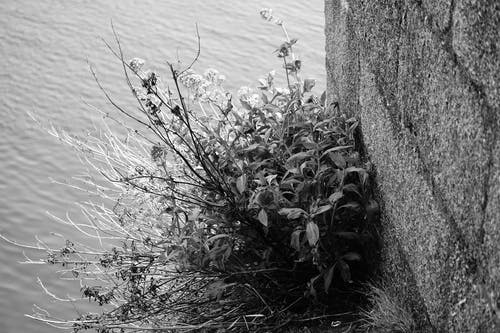 mur, ²plante, アルブステ, ボタニックの無料の写真素材