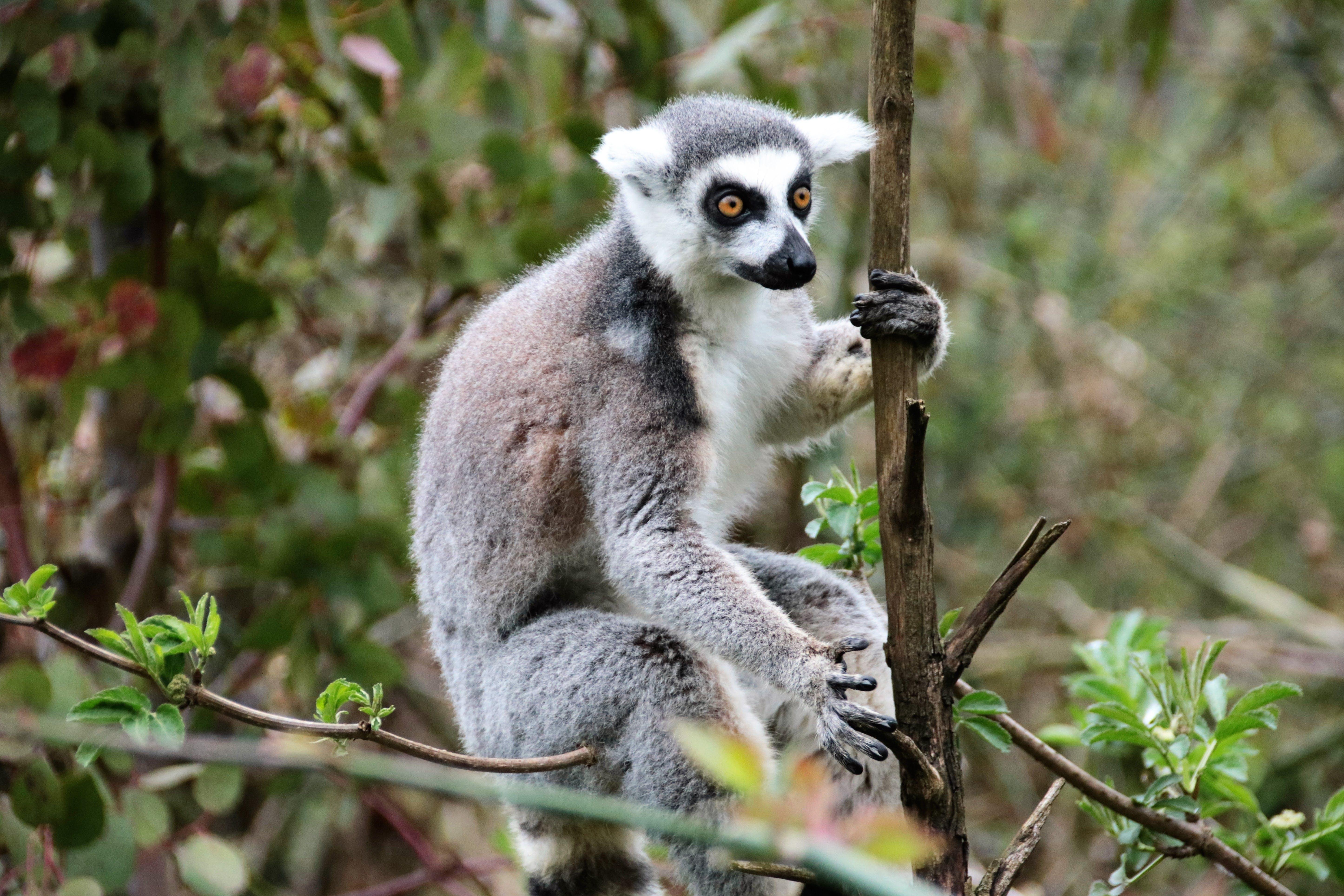 Free stock photo of nature, animal, cute, grey