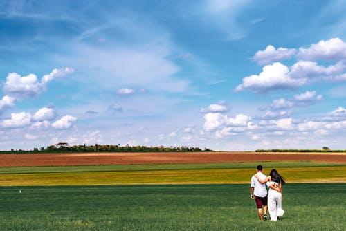 Foto d'estoc gratuïta de a l'aire lliure, agricultura, blat, camp