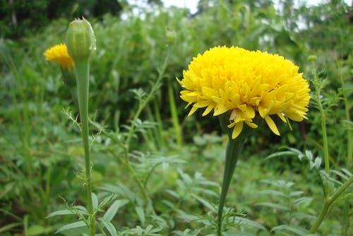 Free stock photo of beautiful flower, orangery flowers
