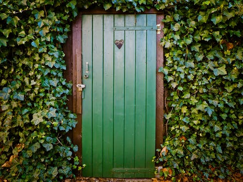 Green Door and Green-leafed Plants