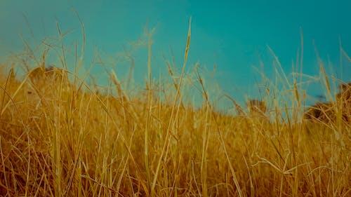 Foto stok gratis langit, rumput