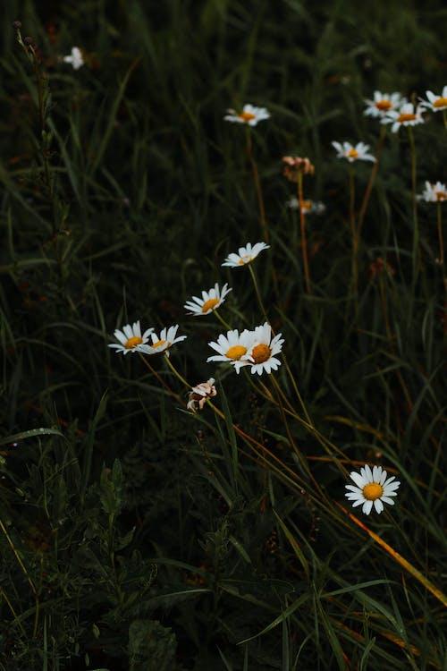 Kostenloses Stock Foto zu aroma, aromatisch, biologie, blühen