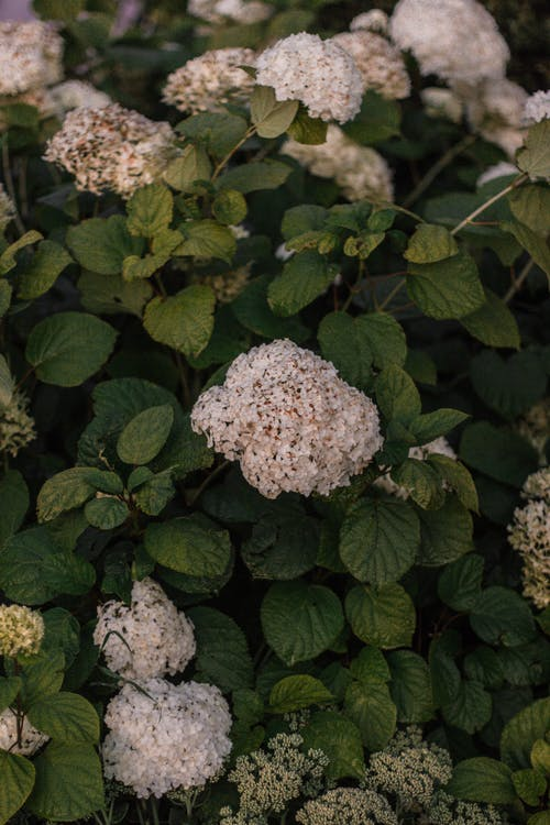 フラワーズ, フローラ, 咲く, 成長の無料の写真素材