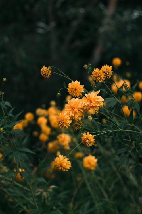 Photo of Yellow-Petaled Flowers