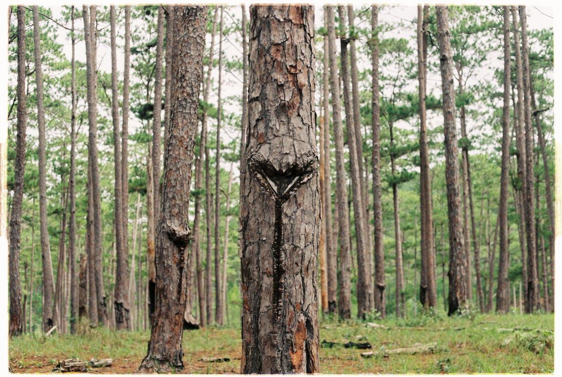 chropowaty, drewniany, drzewa