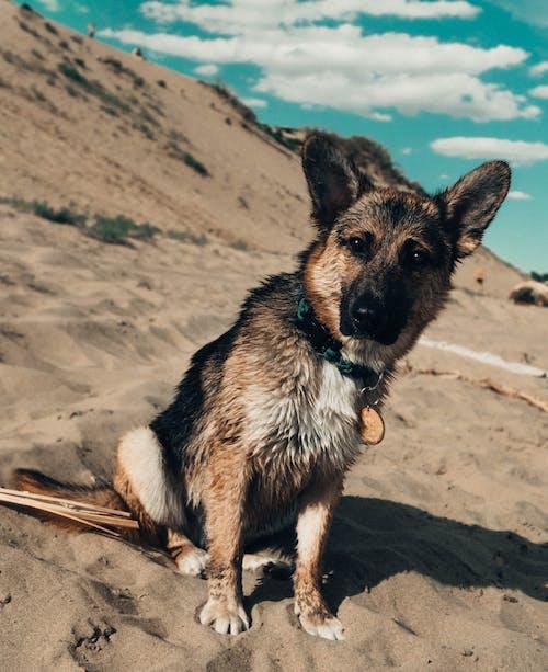 天空, 海灘, 狗, 藍色 的 免费素材照片