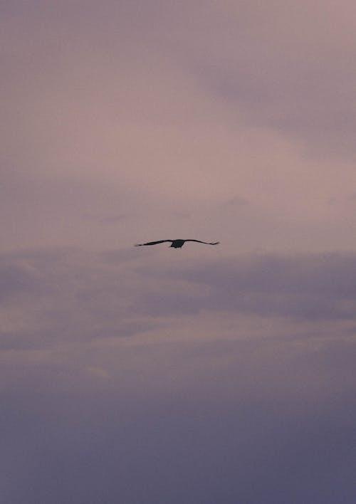 Foto stok gratis burung, lalat, langit
