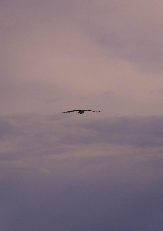 天空, 飛, 飞