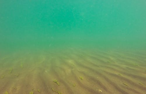 Foto stok gratis di bawah air, greeen, kuning, menyelam