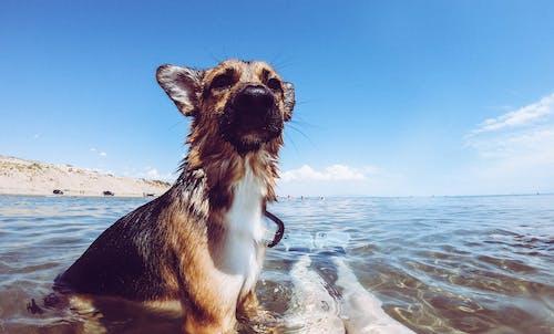 Безкоштовне стокове фото на тему «вода, море, небо, синій»