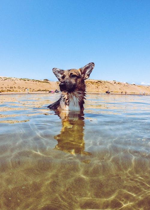 Foto stok gratis air, anjing, biru, langit