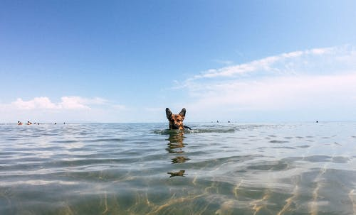 Kostnadsfri bild av blå, hav, himmel, hund