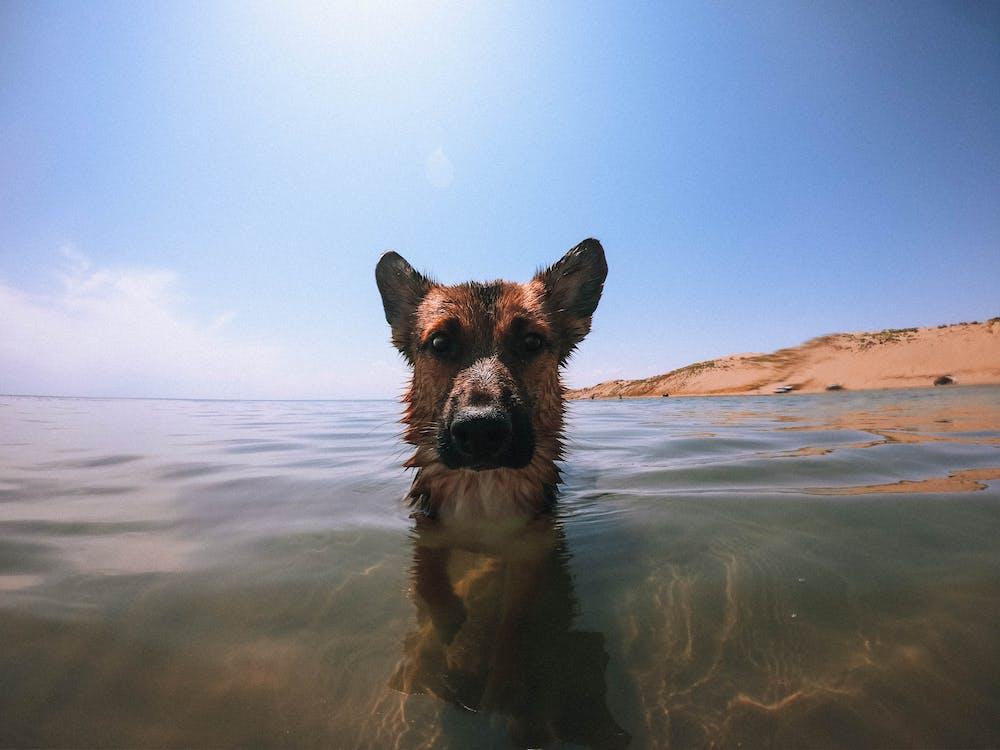 θάλασσα, μπλε, νερό