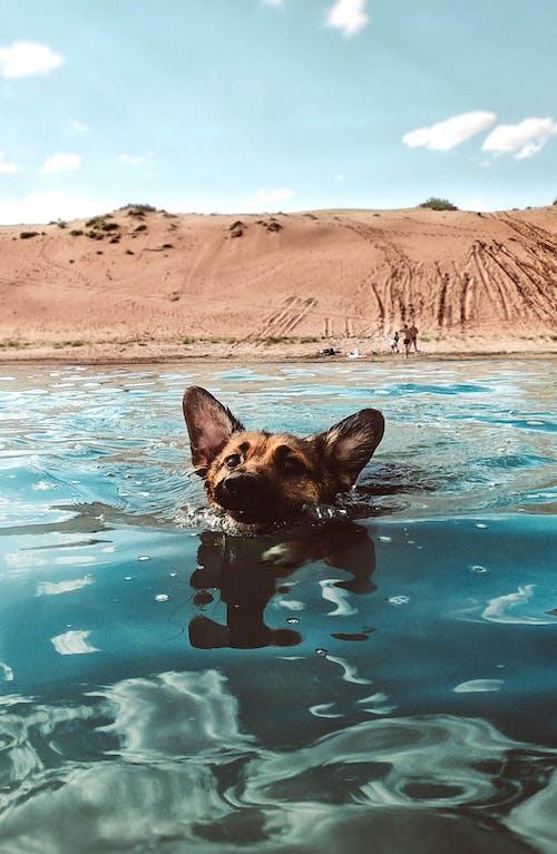 動物, 動物攝影, 反射, 可愛 的 免费素材照片