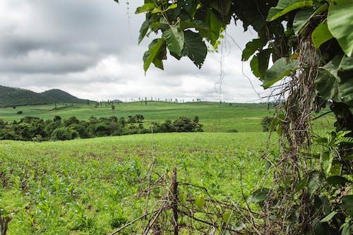 Imagine de stoc gratuită din arbori veșnic verzi, peisaj frumos
